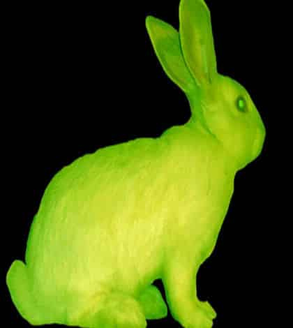 Scientists make glow in the dark bunnies
