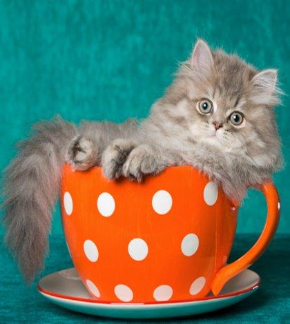 Cat-tastic Cafe!
