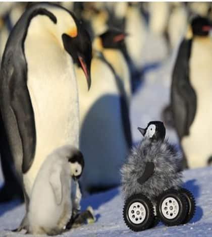 Robotic Penguin Aids Research