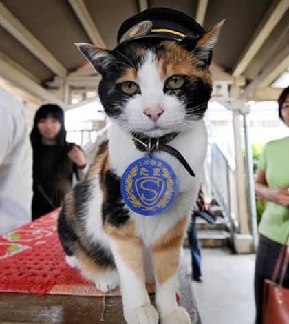 Japanese cat gets huge send off