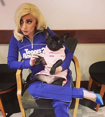 Lady Gaga announces clothing line for puppies