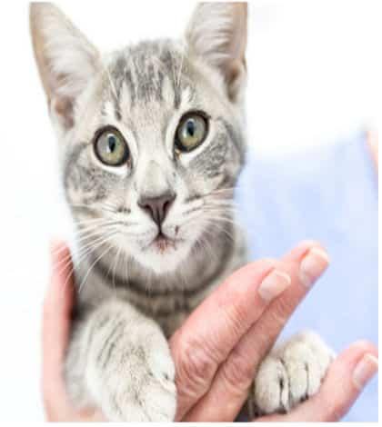 Lucky Kitten Drives 200km in Bonnet