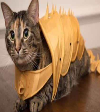 3D Cat Amour