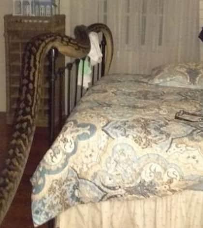 5m python