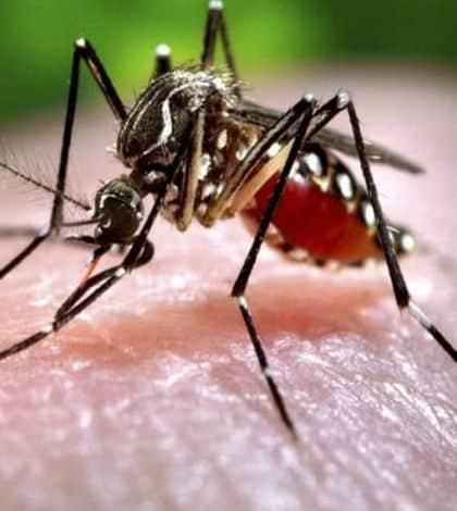 Mosquito repellent TV on sale