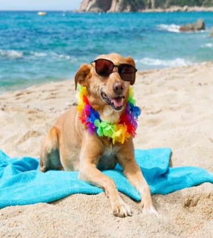 Croatian dog beach opens