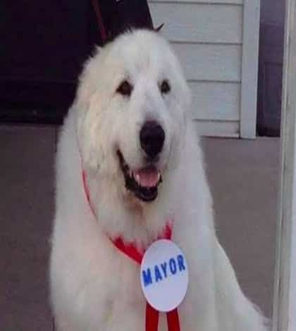 Dog wins third term as town mayor