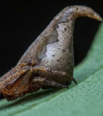 New spider looks like Harry Potter 'Sorting Hat'