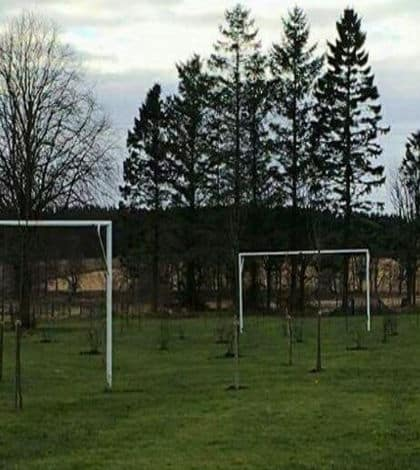 Trees planted on football pitch