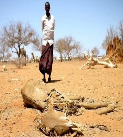 Drought hits Kenya