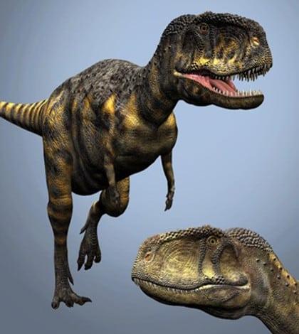 Bradysaurus Fraserburg Karoo South Africa Dinosaurs Dinosaur Expeditions Dinolands