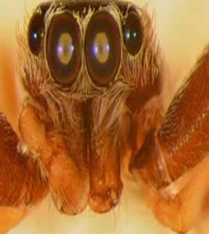 Spider named after NZ biologist