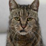 World's oldest cat dies
