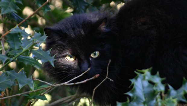 Black cat seen on pest-free Rangitoto