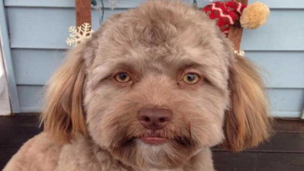 The dog that looks like a human