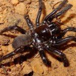 World's oldest spider dies