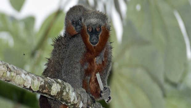 381 new species found in Amazon