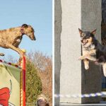 Dogs jump into record books