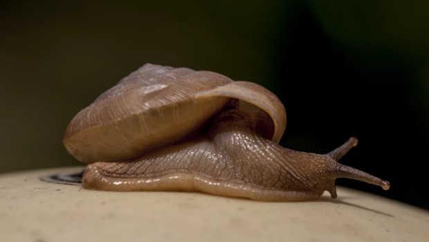 Snail farmers struggling to meet demand